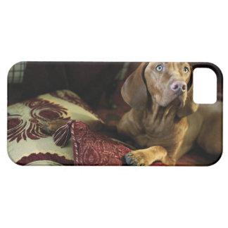 Un perro que miente en las almohadas iPhone 5 Case-Mate cárcasas
