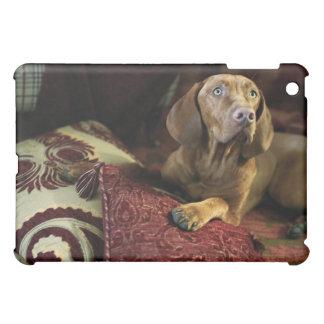 Un perro que miente en las almohadas