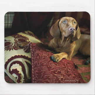 Un perro que miente en las almohadas tapete de raton