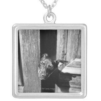 Un perro que mira a escondidas hacia fuera de una collar plateado