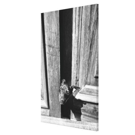 Un perro que mira a escondidas hacia fuera de una impresión en lienzo