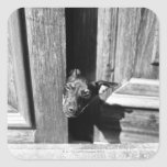 Un perro que mira a escondidas hacia fuera de una pegatina cuadrada