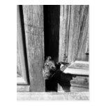 Un perro que mira a escondidas hacia fuera de una postales