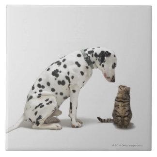 Un perro que mira un gato azulejo cuadrado grande