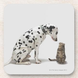 Un perro que mira un gato posavaso