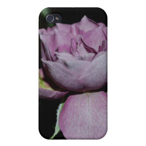 Un pétalo de un color de rosa iPhone 4 cárcasas