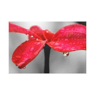 Un pétalo rojo impresiones en lona estiradas