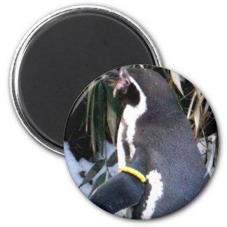 Un pingüino agradecido imanes para frigoríficos