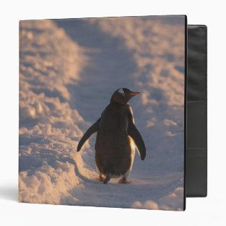 """Un pingüino del gentoo se detiene brevemente para  carpeta 1 1/2"""""""