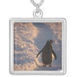 Un pingüino del gentoo se detiene brevemente para  grímpola