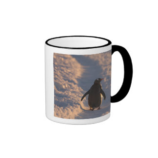 Un pingüino del gentoo se detiene brevemente para  taza