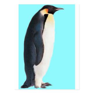 ¡Un pingüino en azul!  ¡Un regalo de la diversión Tarjeta Postal