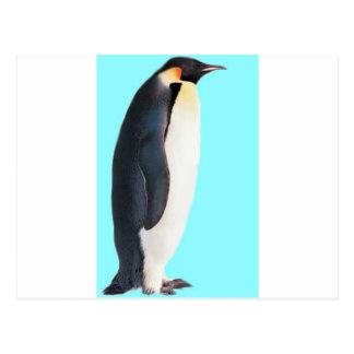 ¡Un pingüino en azul!  ¡Un regalo de la diversión Postales