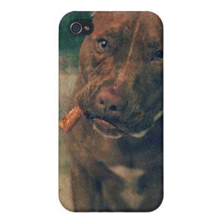 Un pitbull rojo de la nariz que mastica un cigarro iPhone 4 funda