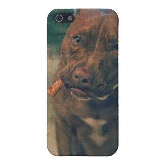 Un pitbull rojo de la nariz que mastica un cigarro iPhone 5 funda