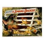 """¡Un pollo de primavera, """"oh! Teatro de la mamá"""" vi Tarjeta Postal"""