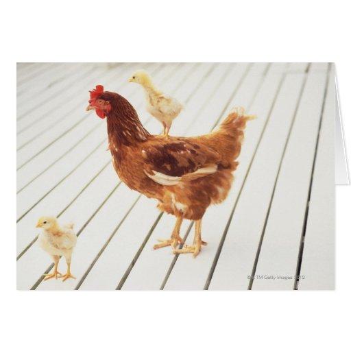 Un pollo y dos polluelos en un piso de madera, tarjetas
