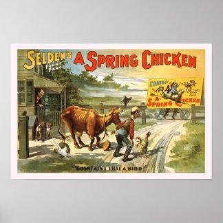 Un poster del vintage del pollo de primavera