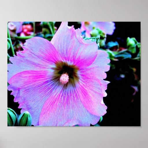Un poster púrpura del hibisco