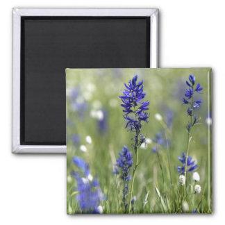Un prado de la montaña de wildflowers incluyendo imán cuadrado