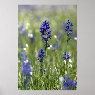 Un prado de la montaña de wildflowers incluyendo impresiones