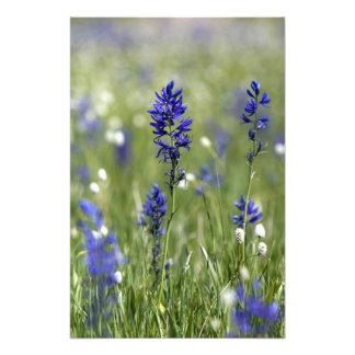 Un prado de la montaña de wildflowers incluyendo fotografia