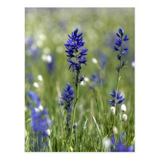 Un prado de la montaña de wildflowers incluyendo tarjeta postal