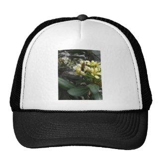Un primer 2 de la abeja gorra