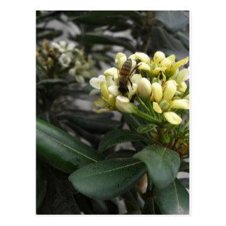 Un primer 2 de la abeja postales