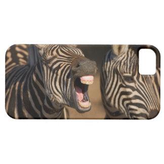 Un primer de una cebra que muestra sus dientes, iPhone 5 coberturas
