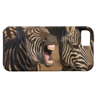Un primer de una cebra que muestra sus dientes, iPhone 5 fundas