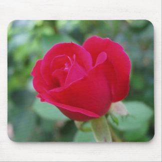 Un qué color de rosa impresionante alfombrillas de ratón