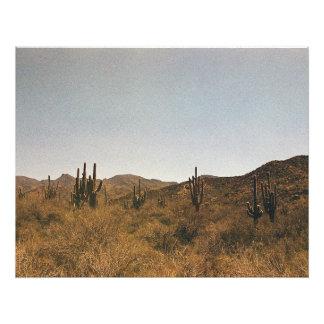 Un racimo de cactus