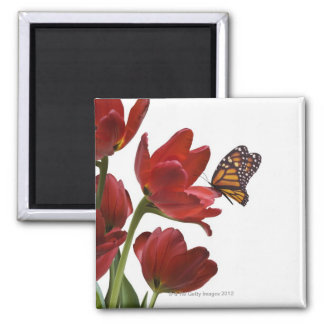 un ramo de tulipanes rojos es visitado por un mona imán de nevera