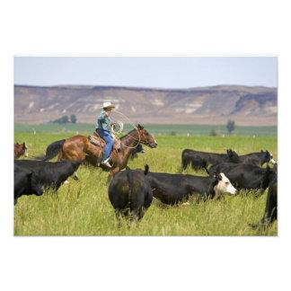 Un ranchero a caballo durante un rodeo 2 del ganad cojinete