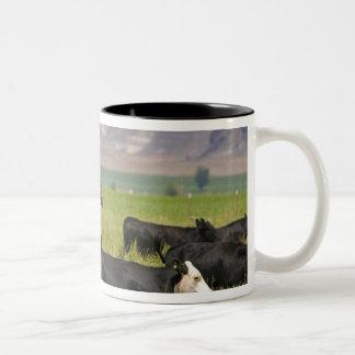 Un ranchero a caballo durante un rodeo 2 del taza de café de dos colores