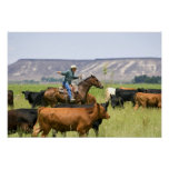 Un ranchero a caballo durante un rodeo del ganado posters