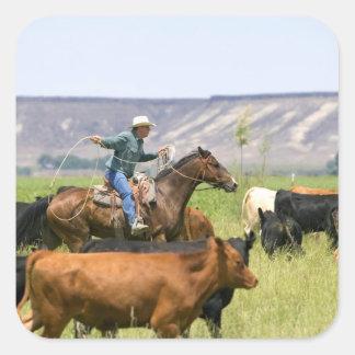 Un ranchero a caballo durante un rodeo del ganado pegatina cuadrada