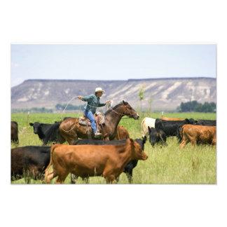 Un ranchero a caballo durante un rodeo del ganado impresión fotográfica