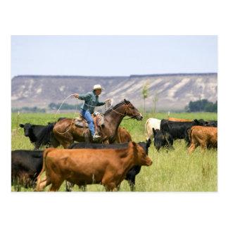 Un ranchero a caballo durante un rodeo del ganado postal