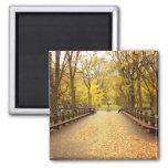 Un rastro de las hojas de otoño, Central Park, NYC Imán De Frigorífico