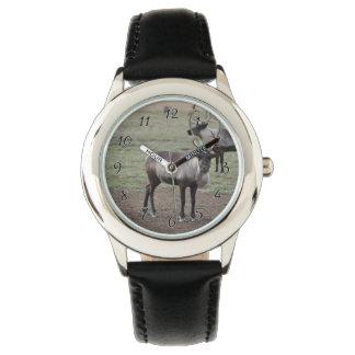 Un reno de los pares en un campo en una granja del reloj de mano