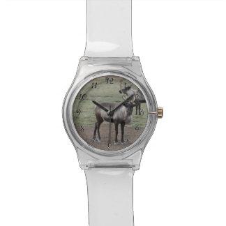 Un reno de los pares en un campo en una granja del relojes