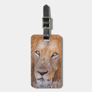 Un retrato de un león etiqueta de maleta