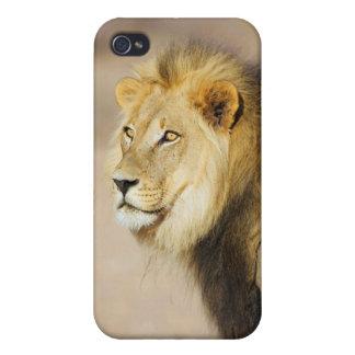 Un retrato de un león, parque internacional de iPhone 4 funda