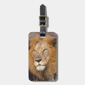 Un retrato de un león que mira en la distancia etiqueta para maleta