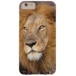 Un retrato de un león que mira en la distancia funda de iPhone 6 plus barely there