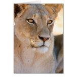 Un retrato de una leona que mira en la distancia tarjeta de felicitación