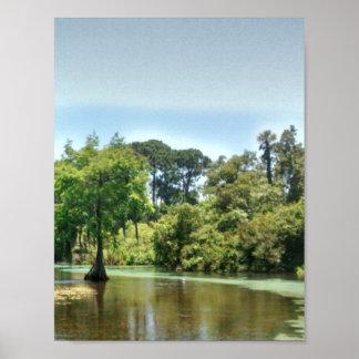 Un río de la primavera en Weeki Wachee la Florida Posters