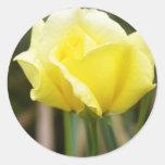 Un rosa amarillo etiqueta redonda